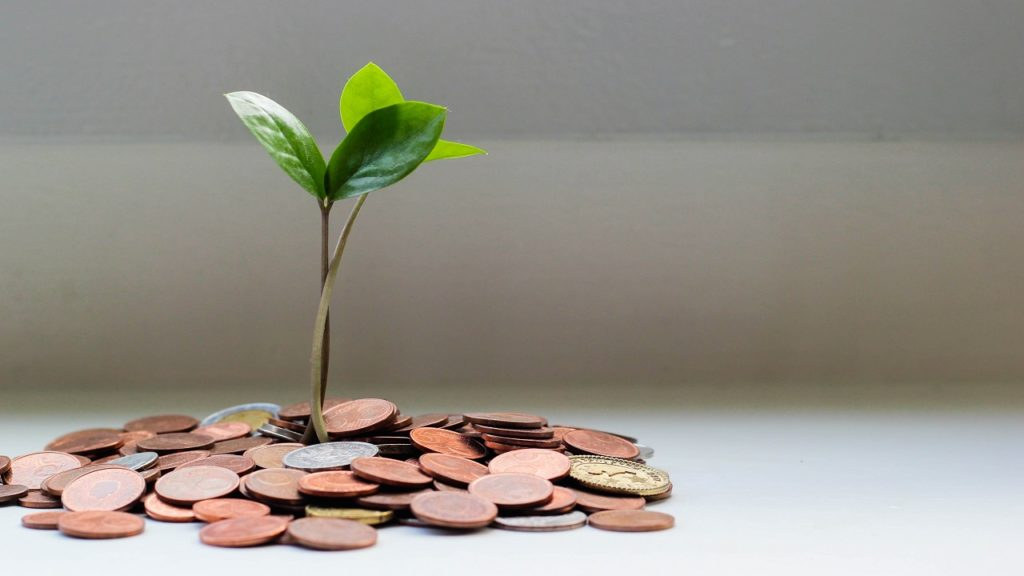 eine pflanze wächst aus geld
